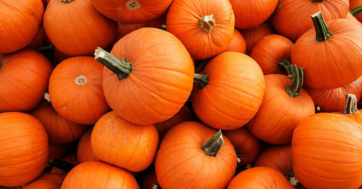 Are pumpkins a fruit or vegetable