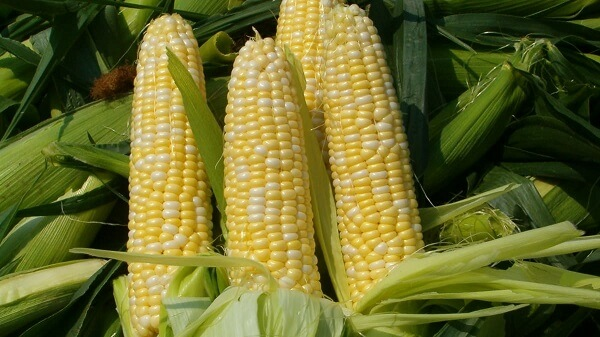 What are some ways to reheat corn