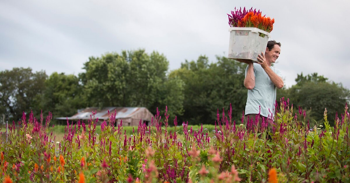 The incredible flower farms are almost too good to be true
