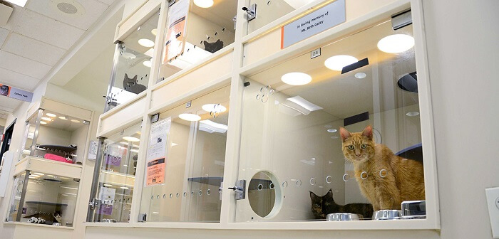 Local Pet Shelters