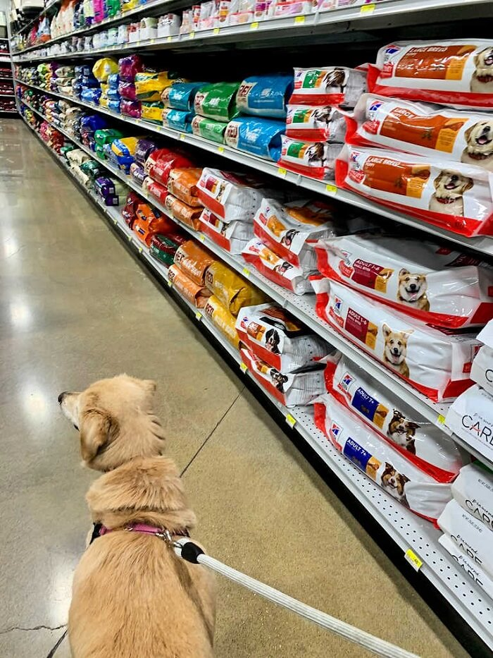 Search for Free Dog Food in Your Area