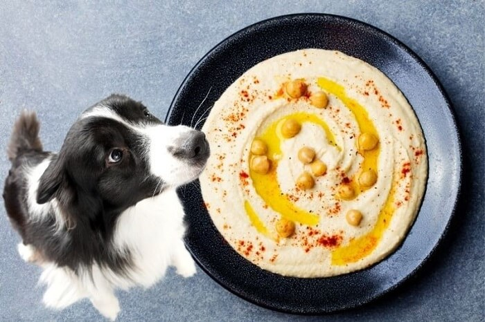 Can Dogs Eat Hummus Here's Your Answer