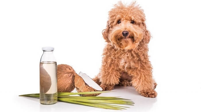 Is coconut oil safe for dogs to consume