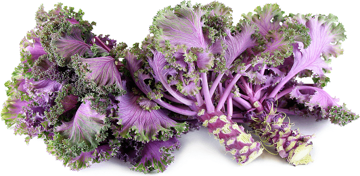 Ways to Choose the Best Kale